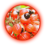 Guarana Ekstrak